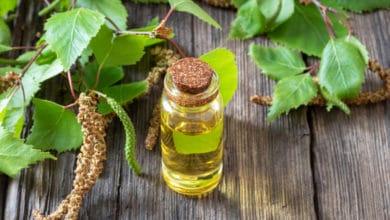 Photo of Tutte le proprietà curative dell'olio essenziale di betulla