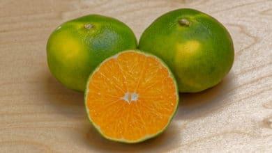Photo of Alla scoperta del Satsuma Miyagawa, il mandarino asiatico