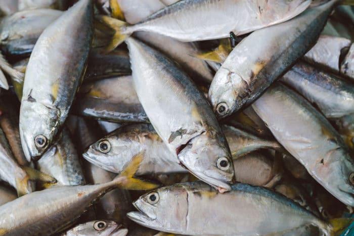 farina di pesce