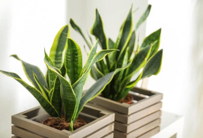 piante resistenti al sole e che richiedono poca acqua