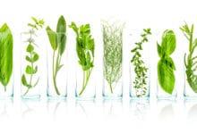 Photo of Tutto sul mondo degli estratti vegetali, per capire meglio i cosmetici e i preparati erboristici