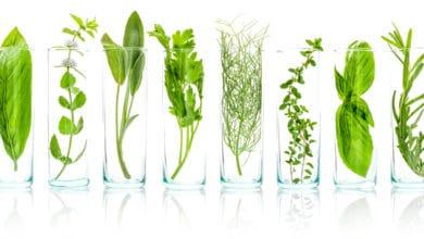 estratti vegetali
