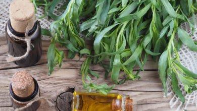olio essenziale di dragoncello